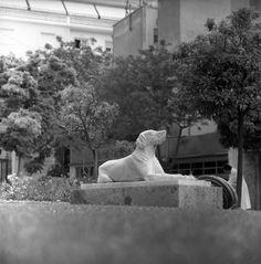 Kυψέλη, 1959 Mount Rushmore, The Neighbourhood, Lion Sculpture, Statue, Dogs, Travel, Athens Greece, City Life, Photographs