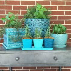 Herbs such as lavender, rosemary, lemon thyme, lemongrass, catnip, lemon balm, peppermint and basil smell amazing — but not to mosquitoes. Also mosquito geraniums (citronella plant) deter mosquitoes.