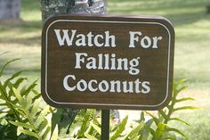 Watch For Falling Coconuts