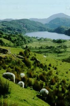 This pic is actually in Snowdonia, Wales ,UK, but so easilycould  be here on the Isle of Arran. the sheep too.......