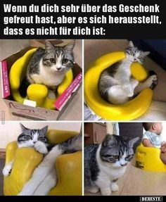 Animals And Pets, Funny Animals, Cute Animals, Tierischer Humor, All About Cats, Just Smile, Animal Memes, Funny Moments, Funny Cute