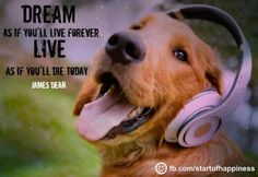 Golden Retriever groovin to the music of Three Dog Night Cute Puppies, Cute Dogs, Dogs And Puppies, Funny Dog Videos, Funny Dogs, Golden Retriever Names, Golden Retrievers, Dog Anxiety, Training Your Dog