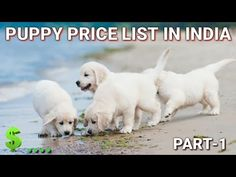 Dog Price List In India | in Hindi | part-1| dog price list - YouTube