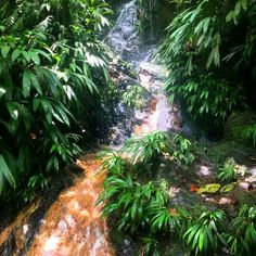Top Experiences in Tobago, Main Ridge Forest Reserve, Gilpin trail, waterfall