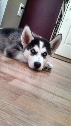 PIC Husky Mix, Dogs, Pictures, Animals, Photos, Animales, Animaux, Photo Illustration, Animal Memes