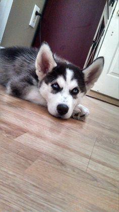 PIC Husky Mix, Dogs, Pictures, Animals, Photos, Animales, Animaux, Doggies, Animais