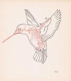 Vintage Hummingbird Anatomy Print Bird Skeleton by vintagegoodness