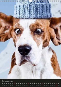 Selfies - Tierische Selbstportraits - CALVENDO Kalender von Elisabeth Stanzer