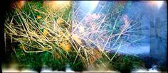 Brindilles sur fond d'automne Photo D Art, Les Oeuvres, Aquarium, Photos, Herbs, Fall Background, Photography, Goldfish Bowl, Pictures
