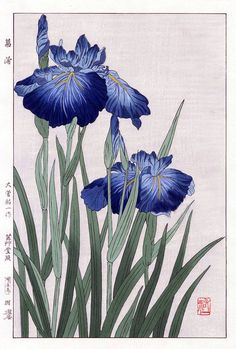 Iris by Yuichi Osuga from Shodo Kawarazaki Spring Flower Japanese Woodblock Prints Botanical Drawings, Botanical Prints, Art Floral, Art And Illustration, Illustrations, Iris Painting, Art Japonais, Guache, Japanese Flowers