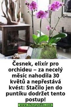 Garden Inspiration, House Plants, Flora, Indoor House Plants, Foliage Plants, Plants, Houseplants, Apartment Plants