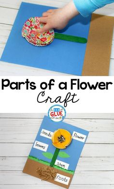 This Parts of a Flower Craft is a fun way for children to learn the different parts that make up a flower and will be a great addition to your flower unit this year. #Spring #craft #flowerunit #garden