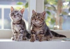 貓咪用尾巴道盡了牠們的喜怒哀樂