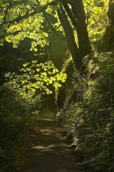 walk in the woods and feel the earth