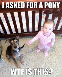 #lol #humor #funny lol humor funny