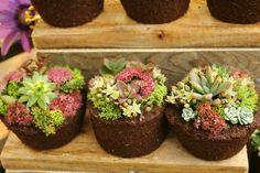 Floral Botanical Cupcakes
