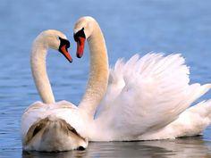 El reino animal contiene varios ejemplos de pares que duran por años e incluso de por vida. Aunque las parejas de por vida son consideradas bastante raras, algunos animales son conocidos por tener...
