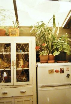 Because in every place there should be things which are alive { House Plants } {Cabinet} {Short Fridge} {white}