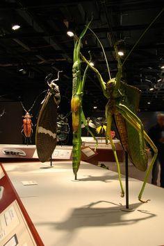Resultado de imagem para insect sculpture giant
