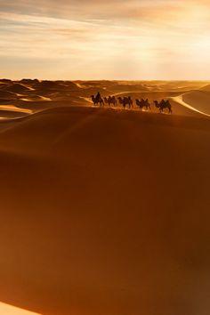 Camel ride in the desert... yes!