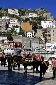 1994 (Aegina-Poros-Spetses) Hydra, Greece...The donkey's of Hydra...no cars on Hydra!  Goods that come into port are packed onto donkeys, and taken wherever it needs to go on the island.