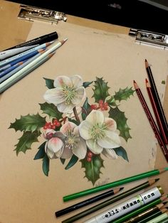 Christmas rose or Helleborus niger in colored pencil and marker on toned drawing paper. Available for purchase at https://www.etsy.com/shop/ArtbyElliAdams