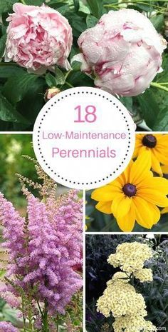 These 18 low maintenance perennials make flower gardening so easy. They're perfect for beginners and for beautifying your yard with minimal effort! # Gardening for beginners 18 Low Maintenance Perennials Flowers Perennials, Planting Flowers, Flower Gardening, Organic Gardening, Perrenial Flowers, Flowers Garden, Vegetable Gardening, Urban Gardening, Balcony Gardening