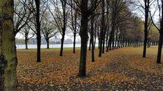 Plantage park in Rotterdam. Klein beetje regen en wind, en de bladeren laten zich massaal vallen, het is herfst...