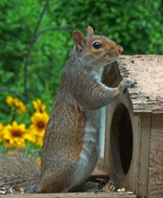 SQUIRRELY WEDNESDAY ......... THE ART OF WHERE IS MY FOOD