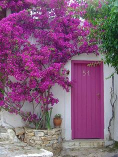 """OMG This door looks just like a rhododendron shrub. Actually that tree is called """"Barbara Karst Bougainvillea"""" – but isn't the door lovely? I like this because it's definitely leaning towards pink/fuchsia color. But I thought I would include it for those of you considering a purple door. It's something a little different you may not have thought of. SW Dynamo 6841 #frontdoor #fuschia #pink Eclectic Front Doors, Modern Front Door, Front Door Design, Purple Front Doors, Front Door Colors, Purple Door, Front Door Planters, Garden Planters, Bougainvillea"""