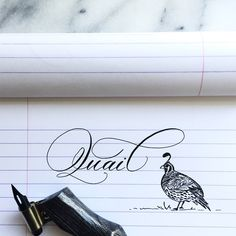 Q is for quail! #calligraphy #pointedpen #quail