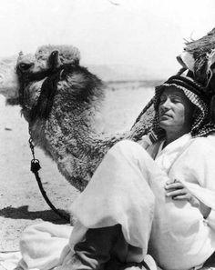 Peter O'Toole se relaja con un camello en el conjunto de Lawrence de Arabia.