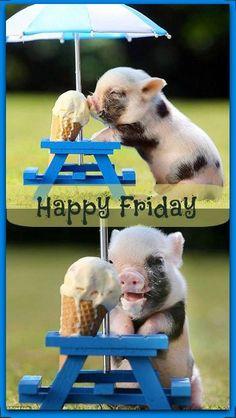 Happy Friday via Living Life at www.Facebook.com/KimmberlyFox.39
