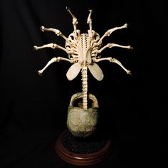 New (2017) Facehugger Tribute to the Alien film franchise and the late great HR Giger. For more work made with real ethically sourced (roadkill) animal bones, plastic replicas, merch and other oddities visit my website at www.forgottenboneyard.com Thanks! Tim Prince Artist Forgotten Boneyard