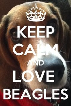 worried & sad for my sister. She lost her beagle to a careless driver. I love my sister. I miss lady her beagle. Today was horribly hard & sad. Cute Beagles, Cute Dogs, Weimaraner, Love My Sister, My Love, I Love Dogs, Puppy Love, Pocket Beagle, Beagle Puppy