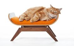canopy studio pet furniture- Dockers and Martin need this!