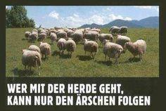 Wer mit der Herde geht ....