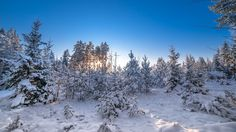 Winter forest - null