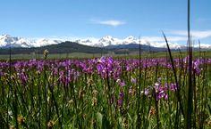Sawtooth Mountains, Idaho USA Sawtooth Mountains, Desert Life, Idaho, Landscape, Usa, Nature, Travel, Naturaleza, Viajes