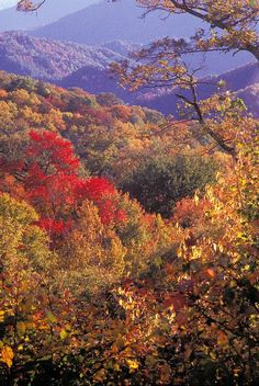 View from Newfound Gap Road showing Fall colors in Great Smoky Mountains National Park