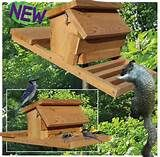 how to make a squirrel house -