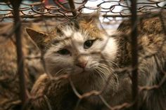 Man accused of beating cat with a wrench, until it was dead, convicted of animal cruelty.June 18 2013  RICHARD #FERRUGIO