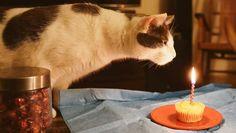 kitty-kat birthday cake
