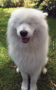 Meet the sweetest dog in the world, Paboo!