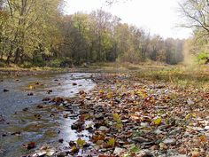Upper Twin Conservation Area - Five Rivers MetroPark