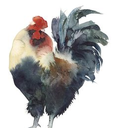 Gallo, Kate Osborne watercolor MY KITCHEN IS DONE IN ROOSTERS. I THINK I NEED A TONDA ORIGINAL IN THE MIX.