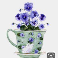 Botanical Art, Botanical Illustration, Illustration Art, Illustrations, Arte Floral, Watercolor Flowers, Watercolor Paintings, Tea Cup Art, Foto Art