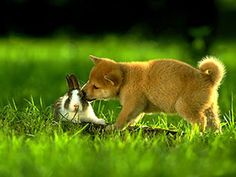 somebunny loves you~ Animals And Pets, Baby Animals, Funny Animals, Cute Animals, Animal Babies, Fur Babies, Shiba Inu, Dog Love, Puppy Love