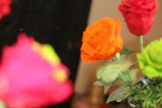 Rose éternelle.