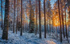Winter in Kainuu and beautiful sunrise